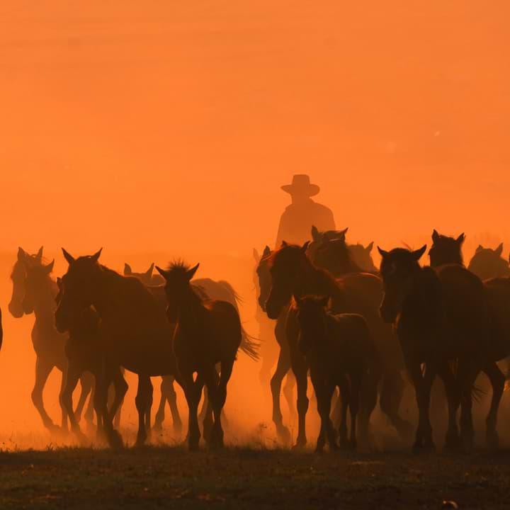 Cowboy rustling horses